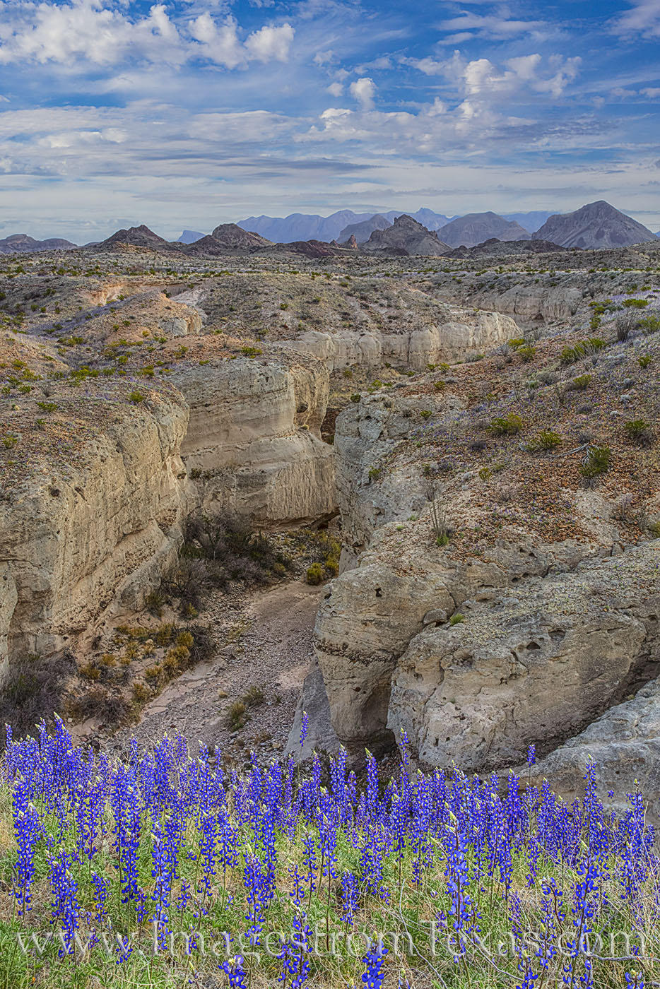 bluebonnets, tuff canyon, wildflowers, big bend national park, chihuahuan desert, texas parks, national parks, ross maxwell, canyon, western slope, photo