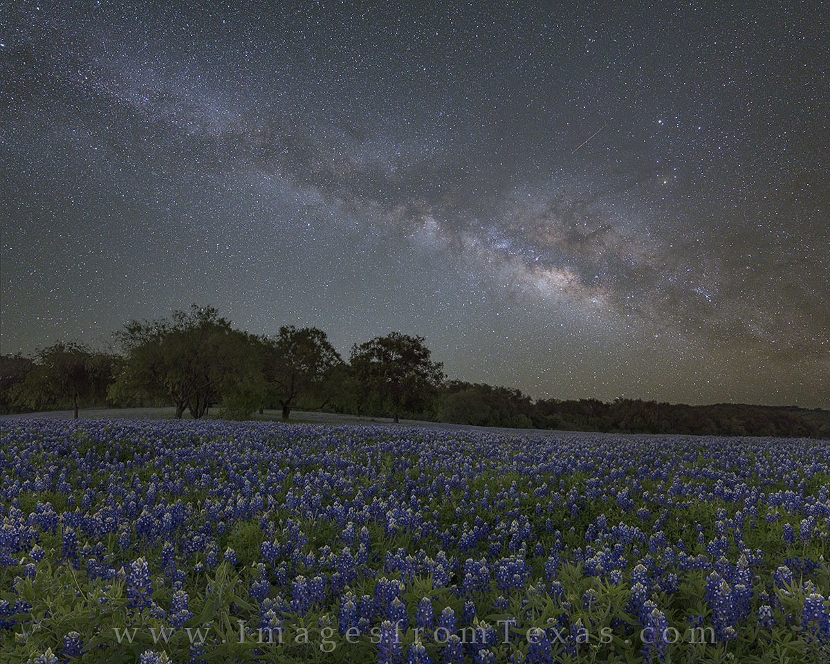 In the early hours of the morning and well before sunrise, the Milky Way appears over this beautiful field of bluebonnets in...