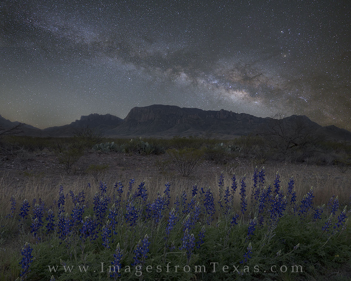 bluebonnets, milky way, big bend national park, chisos mountains, texas desert, chihuahuan desert, texas night, texas landscapes, photo
