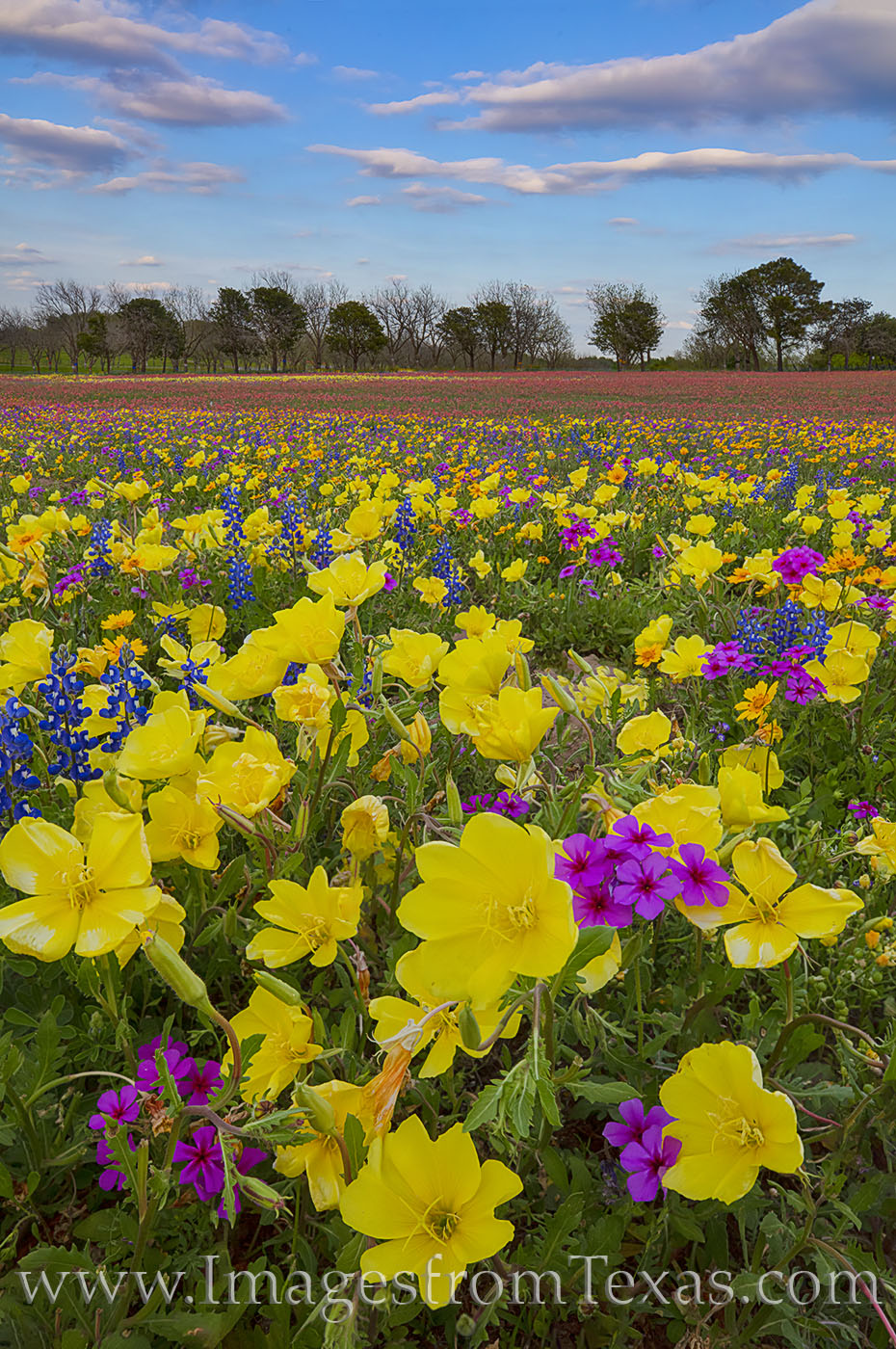 Colorful wildflowers - Missouri primrose and an assortment of other colorful blooms - lead up to a lead to a treeline on the...