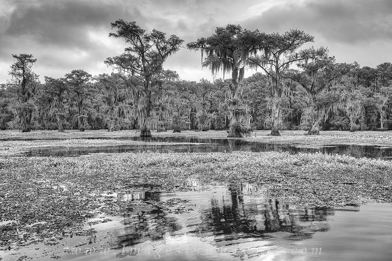 texas landscapes, black and white, texas black and white, black and white prints, texas images, caddo lake images, caddo lake prints, texas prints, photo