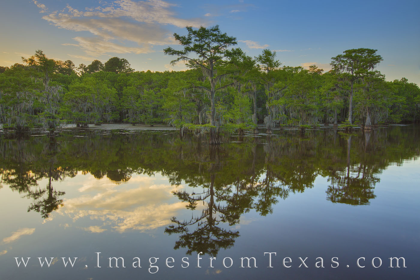 caddo lake, cypress, trees, caddo lake state park, east texas, evening, caddo, sunset, reflections, photo