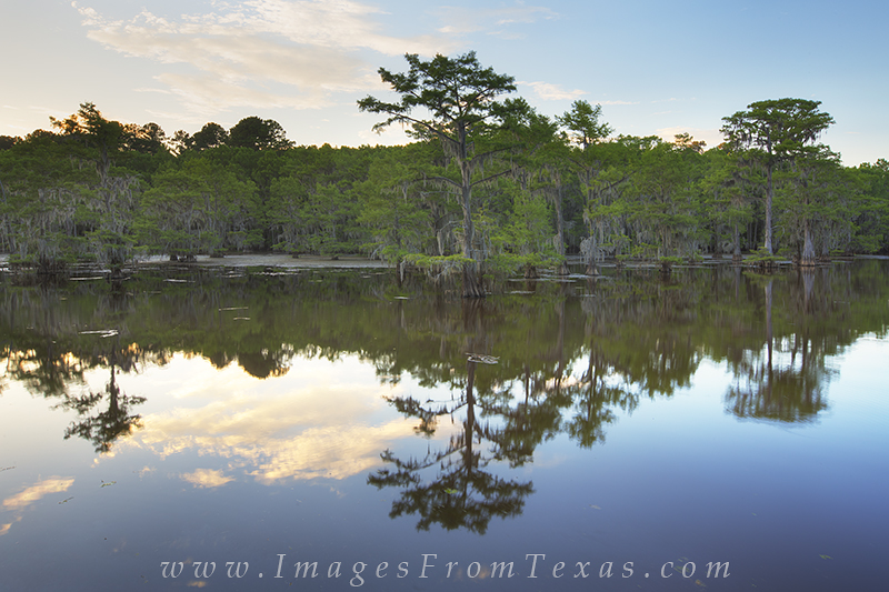 caddo lake state park,caddo lake images,caddo lake prints,east texas photos,texas landscape photos, photo