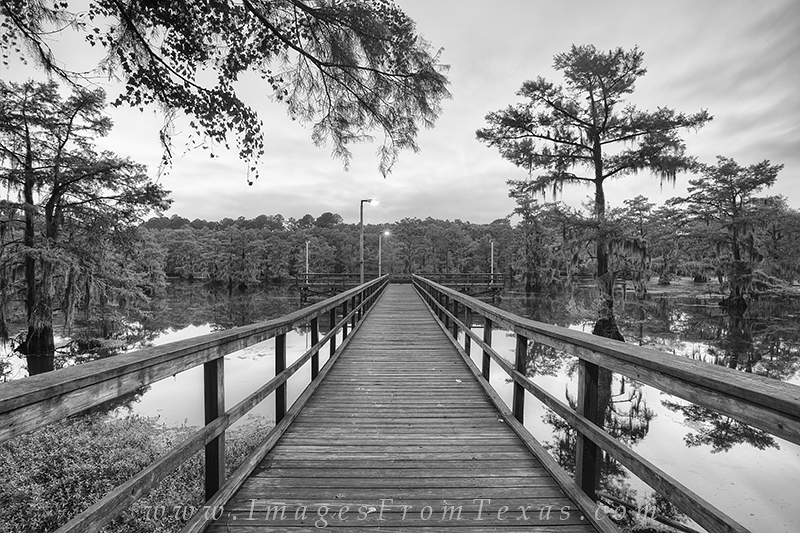 caddo lake,texas black and white,caddo lake state park,caddo lake photos,caddo lake prints,black and white prints,black and white images, photo