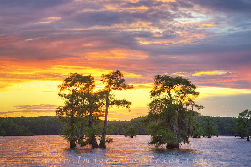 caddo lake sunset,caddo lake photographs,caddo lake prints,texas landscapes,texas sunsets,texas prints, photo