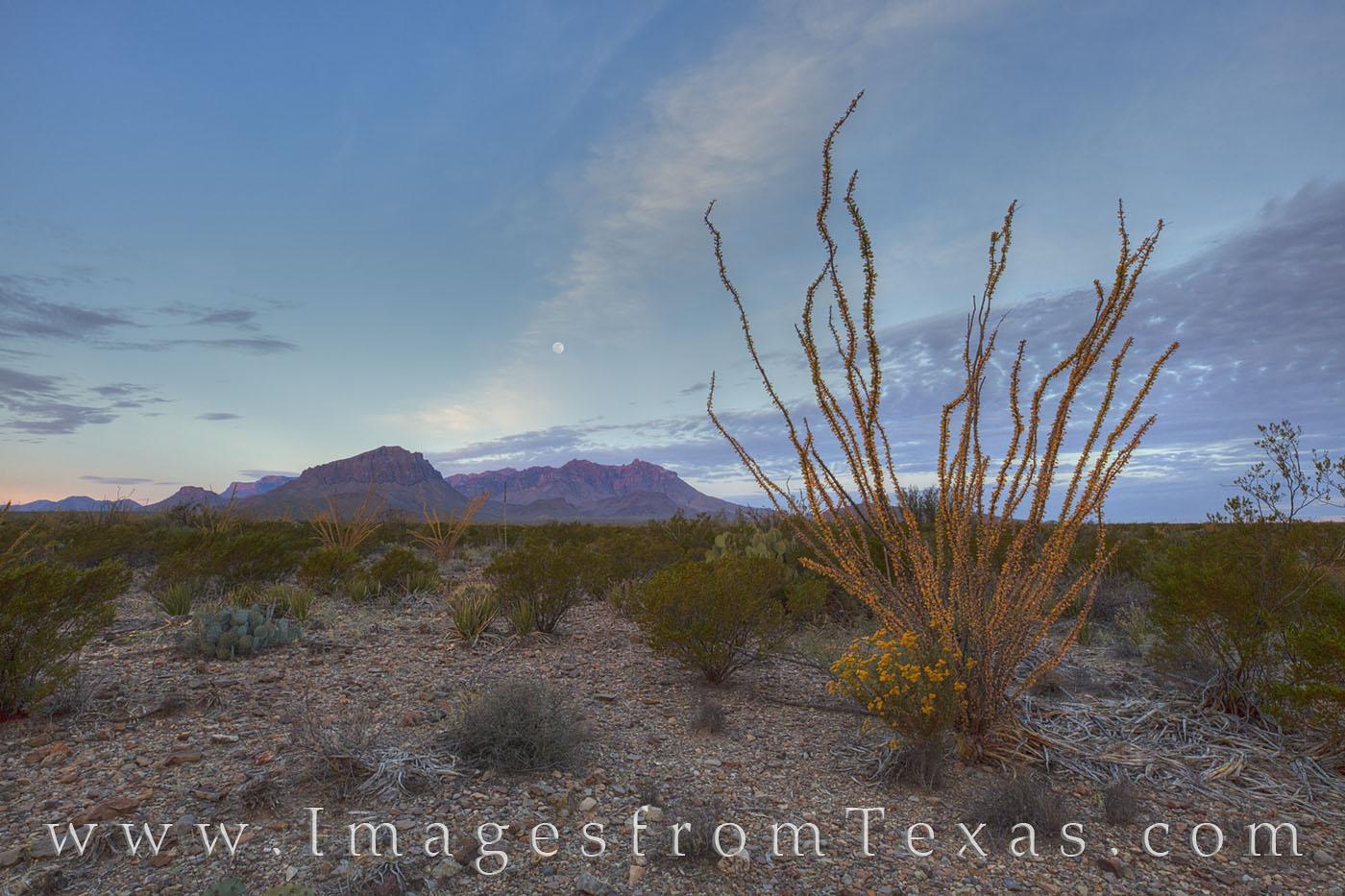 Chisos mountains, big bend national park, ocotillo, moonset, sunrise, chihuahuan desert, texas landscapes, texas hikes, chisos images, big bend images, texas national parks, photo
