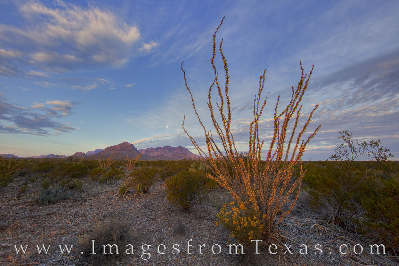 Chisos mountains, big bend national park, ocotillo, moonset, sunrise, chihuahuan desert, texas landscapes, texas hikes, chisos images, big bend images, texas national parks, photo