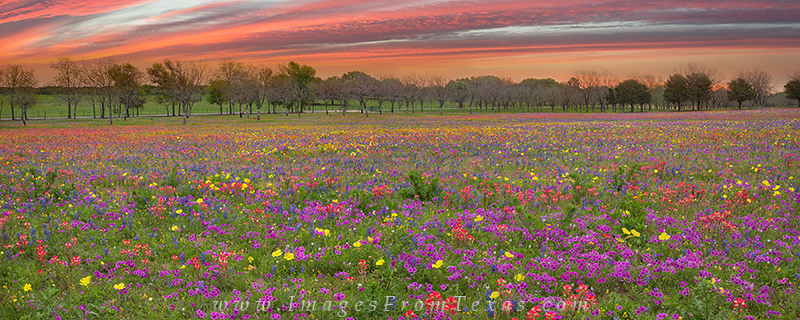 texas wildflower panorama,texas wildflower images,wildflower prints,new berlin,church road, photo