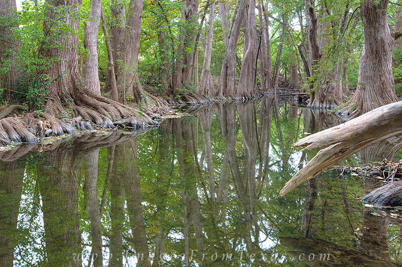 texas hill country,cibolo nature preserve,texas images,texas prints,cypress trees, boerne, photo