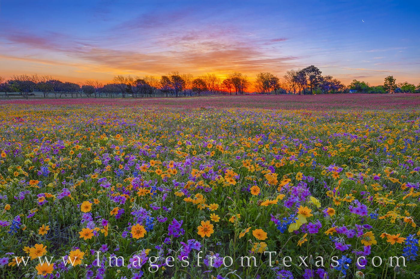 Frost covered the ground on this cold April morning east of San Antonio. Purple wildflowers (phlox) seemed to turn to soft pastels...