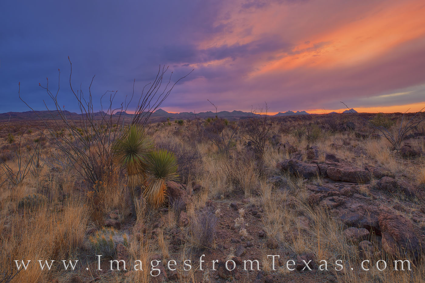 big bend ranch state park, big bend ranch, interior, chihuahuan desert, sunset, yucca, spring, desert, ocotillo, west texas, big bend landscapes, photo