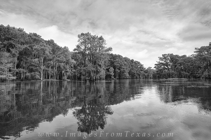 Caddo Lake makes for strong black and white photography opportunities. The cypress trees and spanish moss give this area a mysterious...