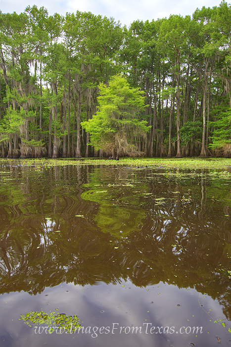 caddo lake state park,east texas photos,caddo lake prints,texas landscapes,caddo lake photos, photo