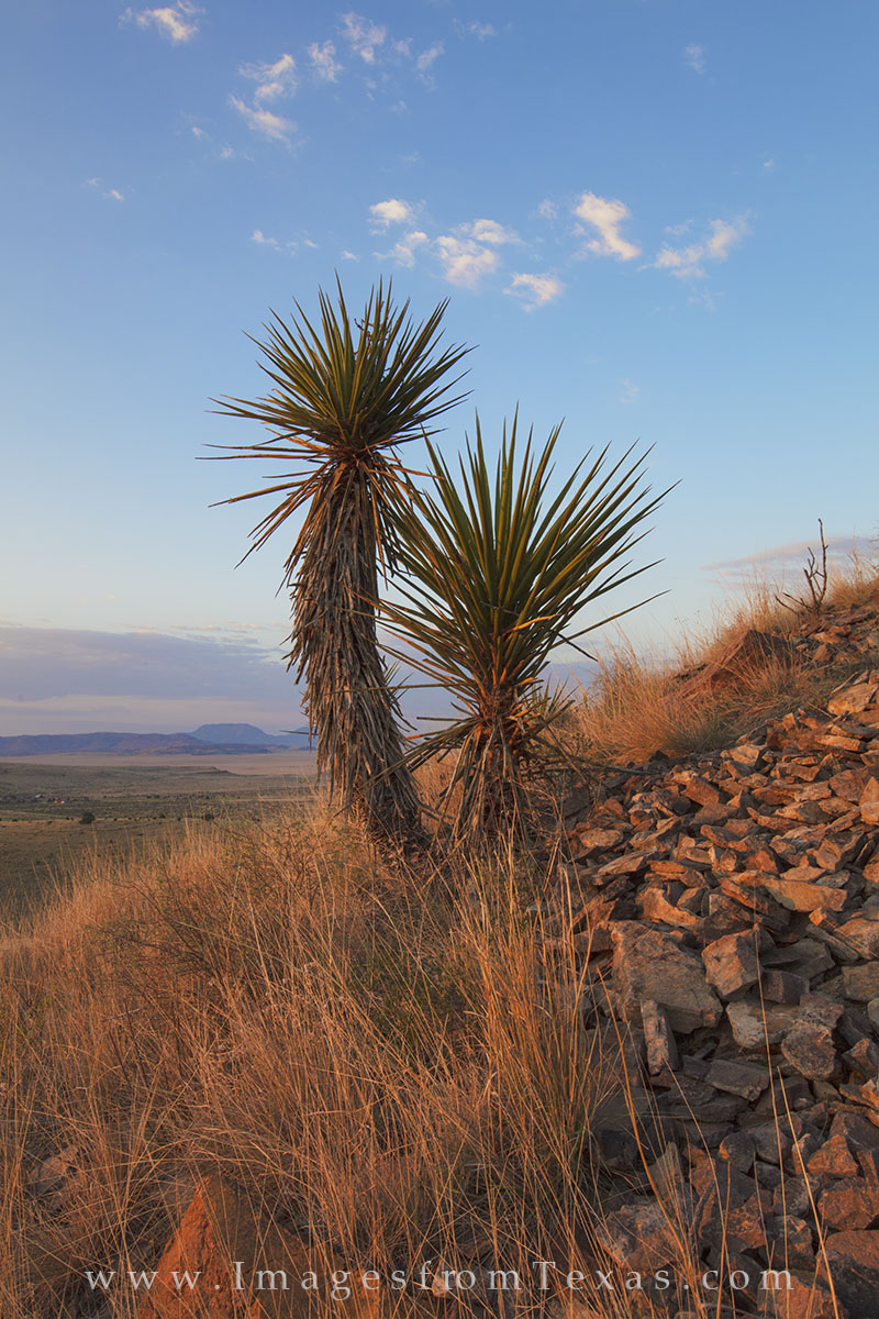 davis mountains images, fort davis, davis mountains state park, west texas, texas landscapes, yucca, morning, sunrise, photo