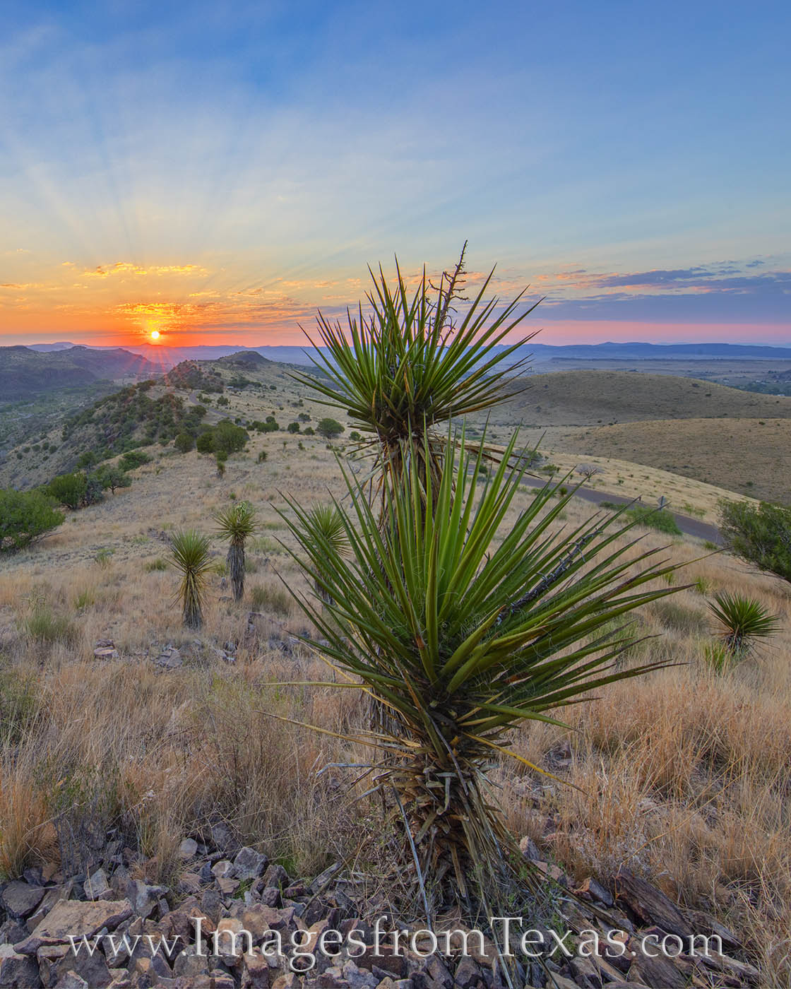 davis mountains, fort davis, davis mountains state park, sunrise, yucca, morning, prints for sale, photo