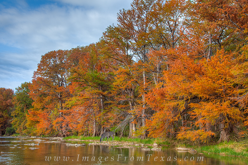 texas hill country,autumn,pedernales river,pedernales falls state park,autumn colors, photo