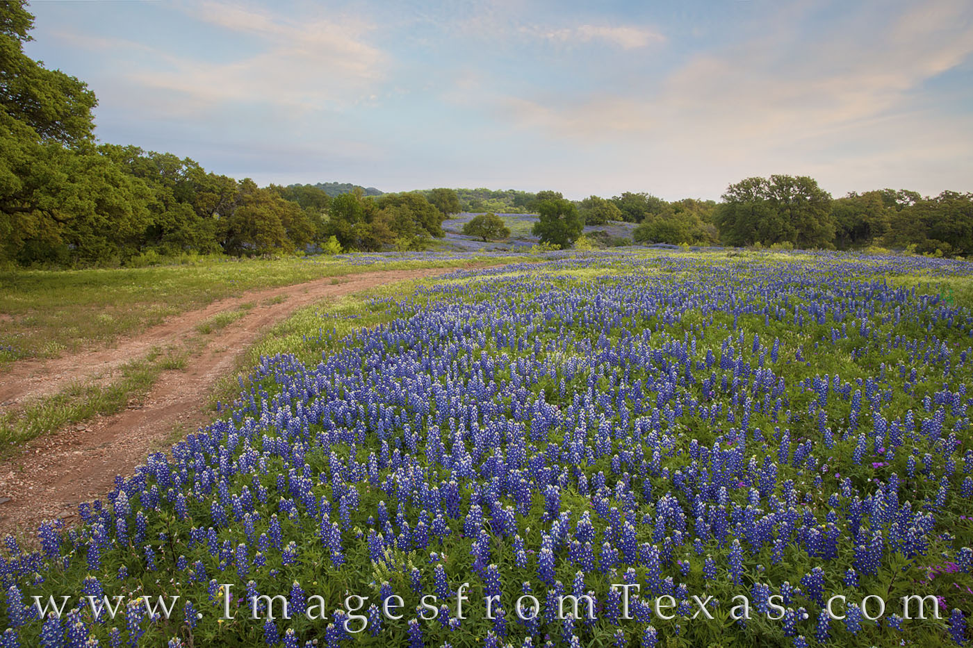 bluebonnets, wildflowers, texas wildflowers, dirt road, country road, spring, morning, landscapes, hill country, texas hill country, blue, flowers, sunrise, photo