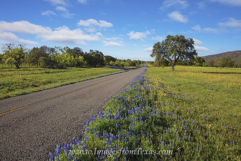 texas hill country,texas wildflowers,texas in spring,texas afternoon,texas highways, photo