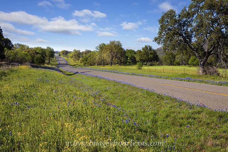 texas hill country,texas highways,texas roads,texas spring,texas wildflowers, photo