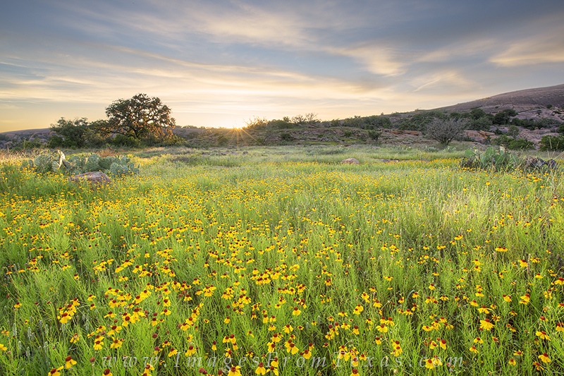enchanted rock state park,texas hill country,texas wildflowers,texas landscapes,enchanted rock prints,texas hill country prints,texas wildflower photos, photo