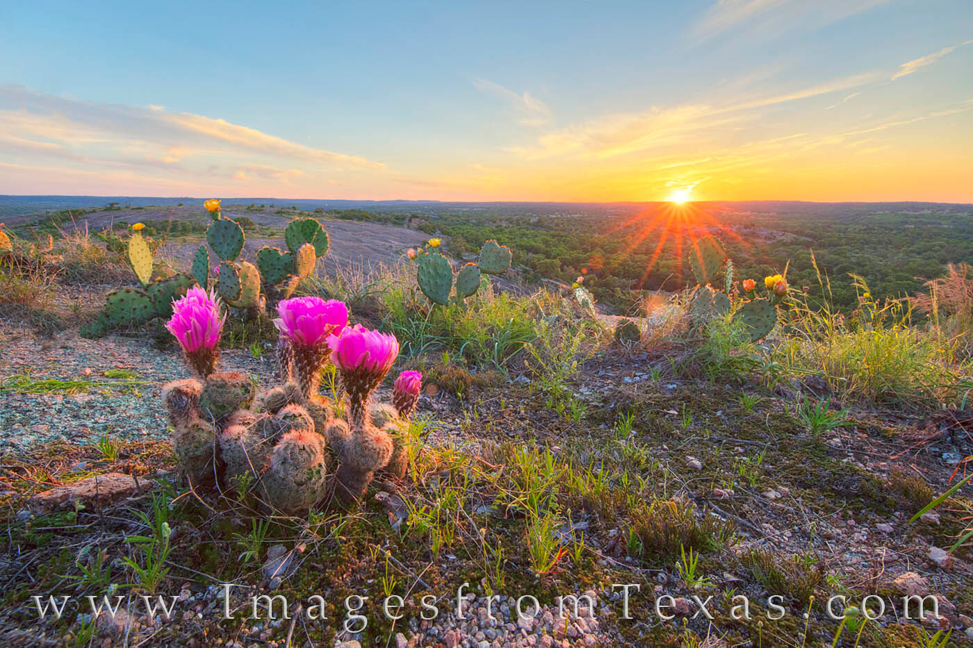 enchanted rock, sunset, purple candle, prickly pear, quinta mazatlan, cactus blooms, wildflowers, texas sunset, texas state parks, photo