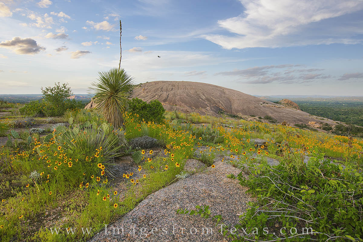 enchanted rock, texas wildflowers, texas hill country, prickly pear, texas wildflowers, texas sunset, hill country sunset, hill country photos, texas landscapes, photo