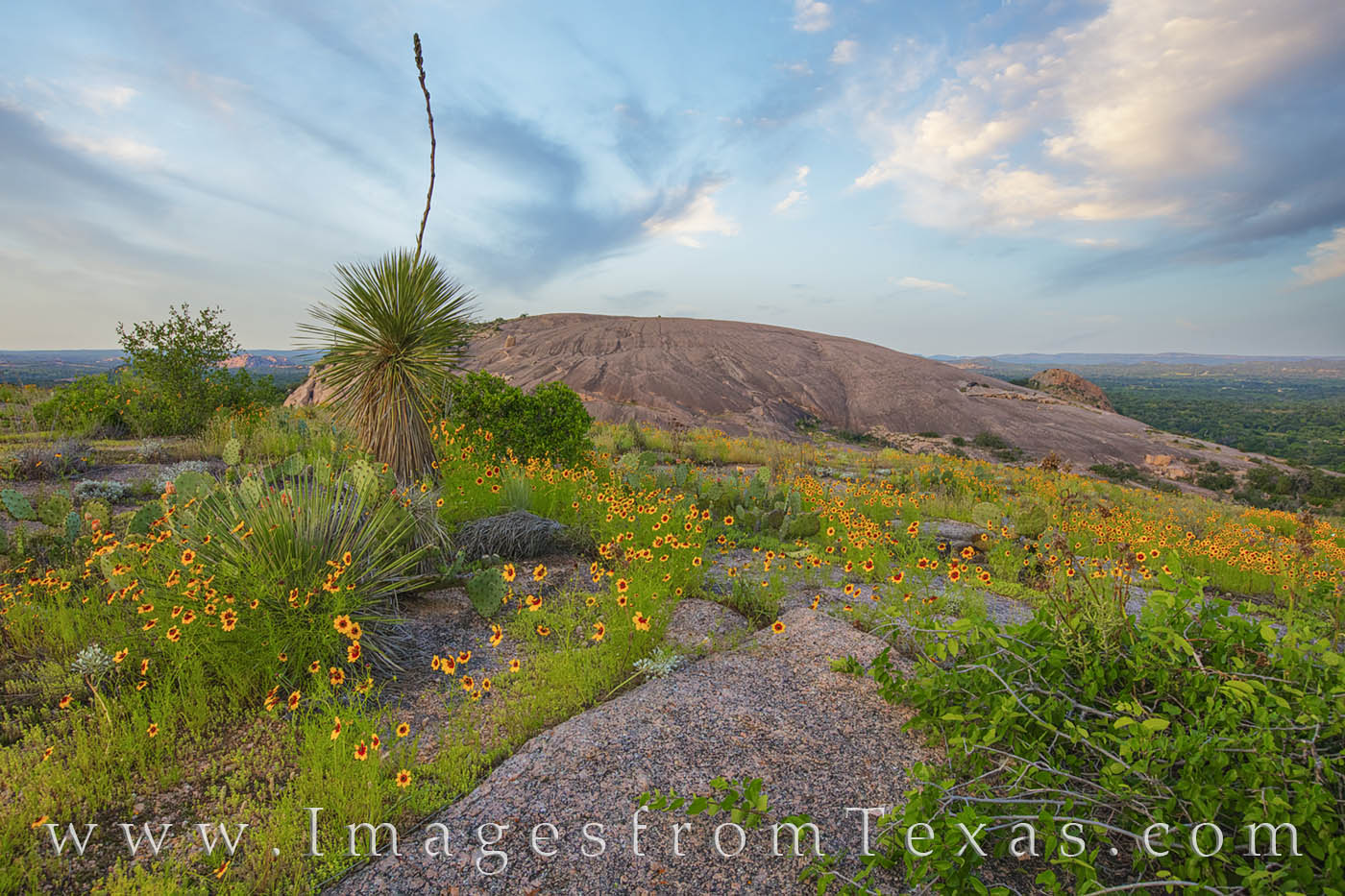 enchanted rock, wildflowers, spring, texas hill country, spring, yellow, yucca, prints for sale, photography, photo