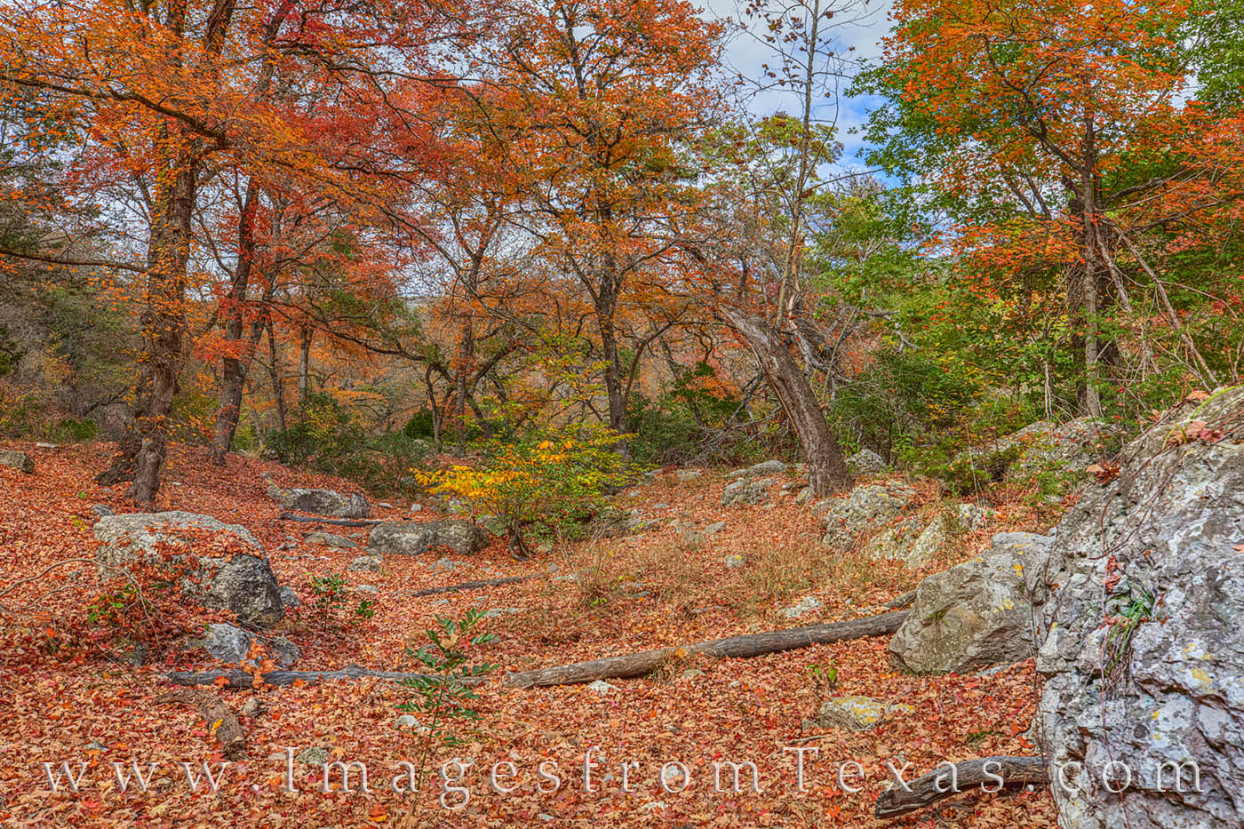 lost maples, fall color, autumn, fall prints, texas state parks, texas hill country, bigtooth maples, photo