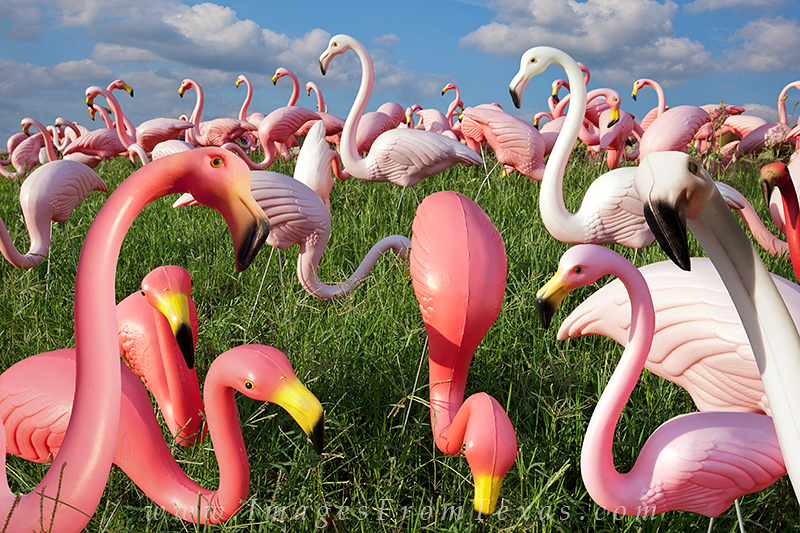 If you've lived in Austin for a while, you'll remember these pink and white flamingoes that stood outside the old garden store...