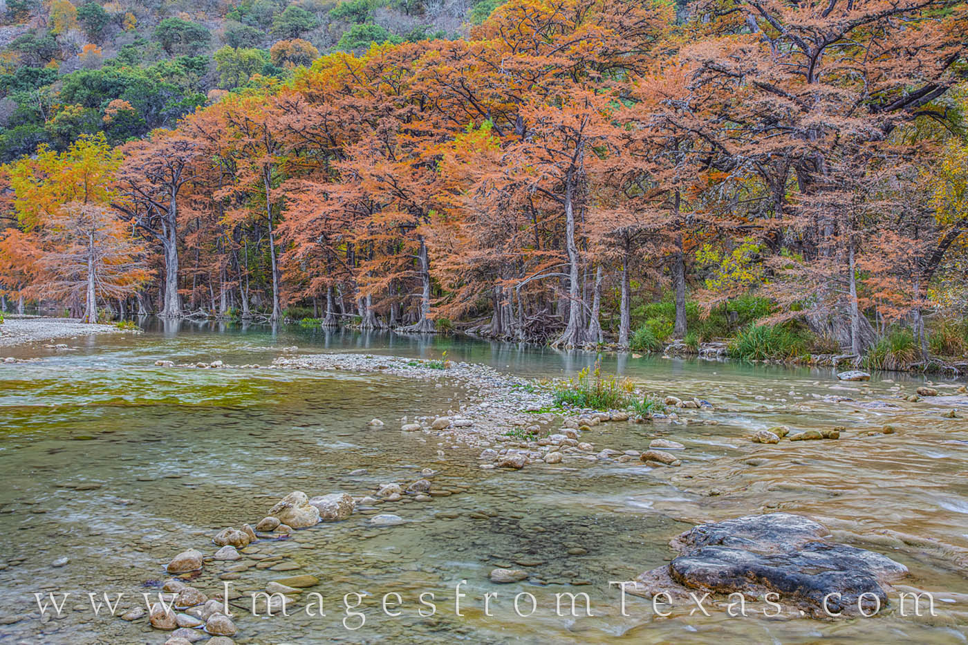 Cypress trees stand along the banks of the Frio River in November, their fall colors on full display. Taken on a cool and cloudy...