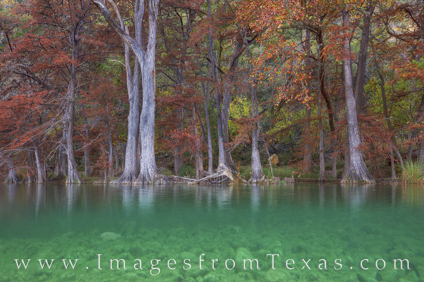 garner state park, autumn colors, texas hill country, fall colors, texas fall colors, frio river, frio river images, water, beneath the water, fish, photo