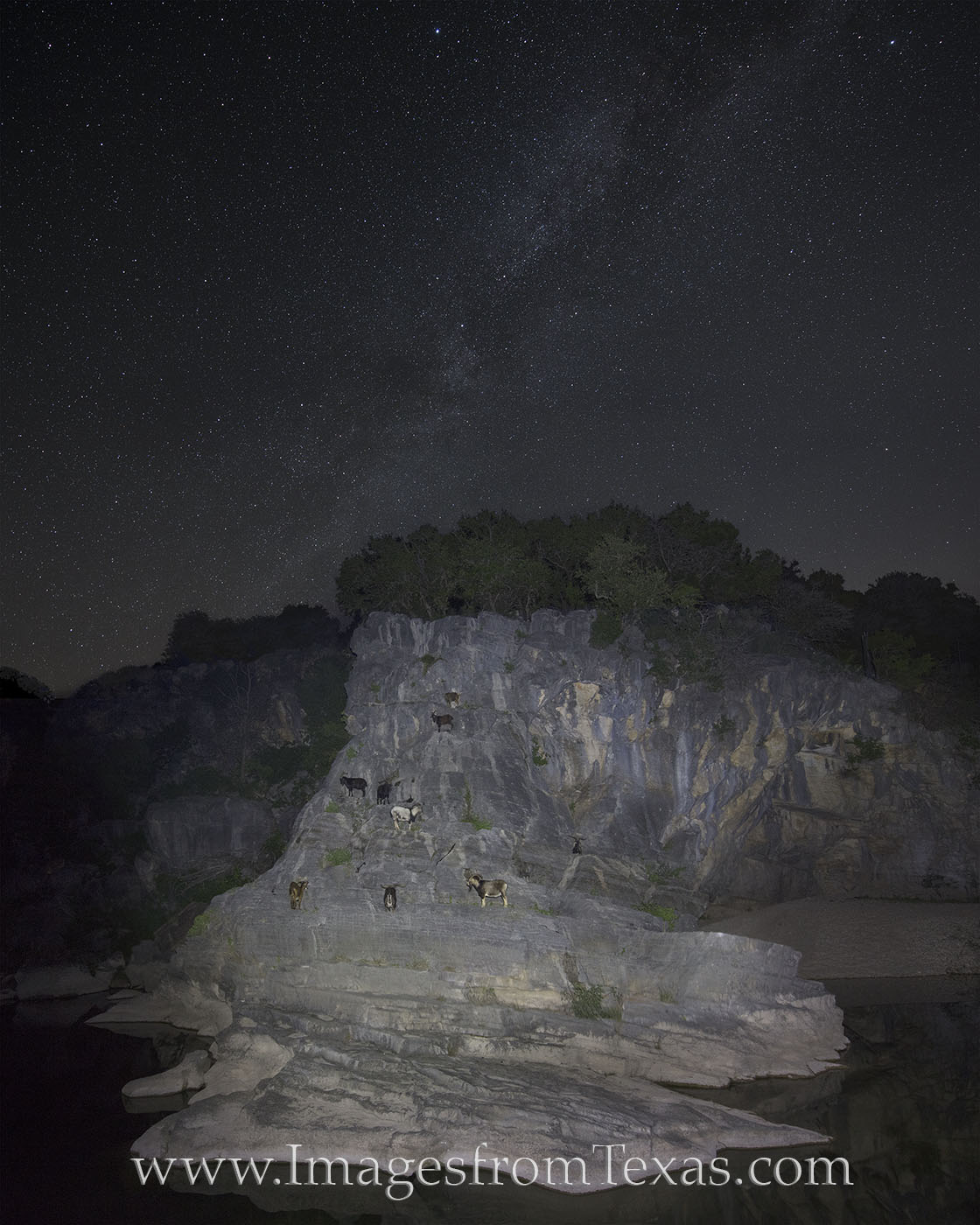 milkly way, goats, texas hill country, pedernales falls, stars, night, pedernales river, pedernales, texas skies, photo