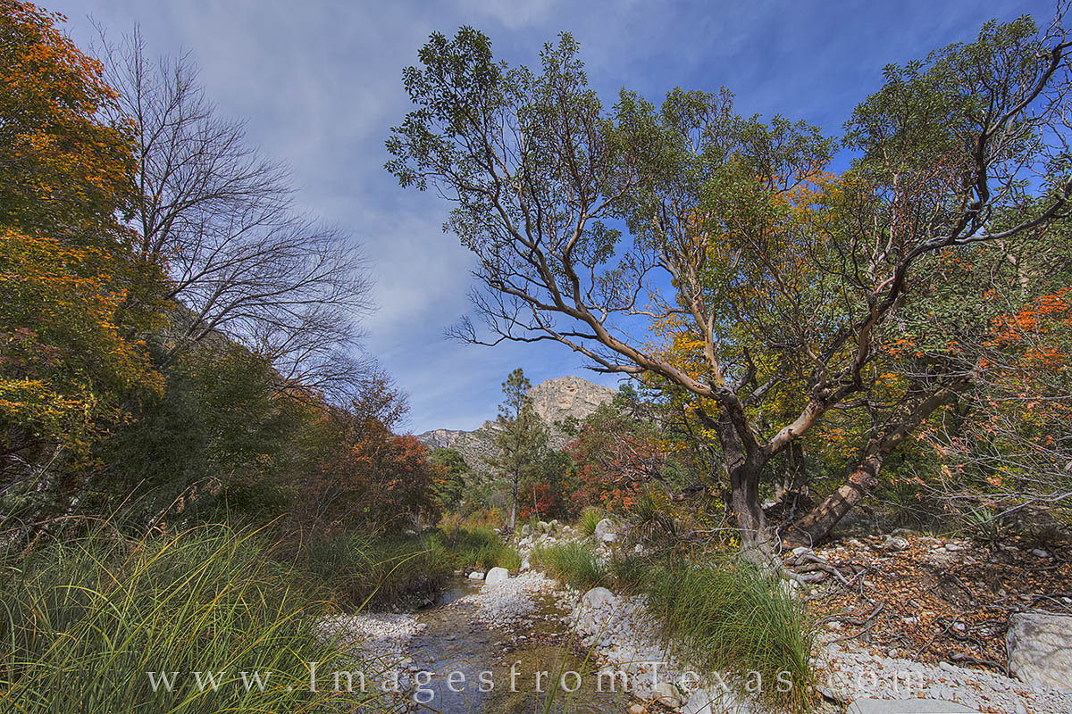 Along the McKittrick Canyon trail in Guadalupe Mountains National Park, a small creek flows through the winding valley. here...