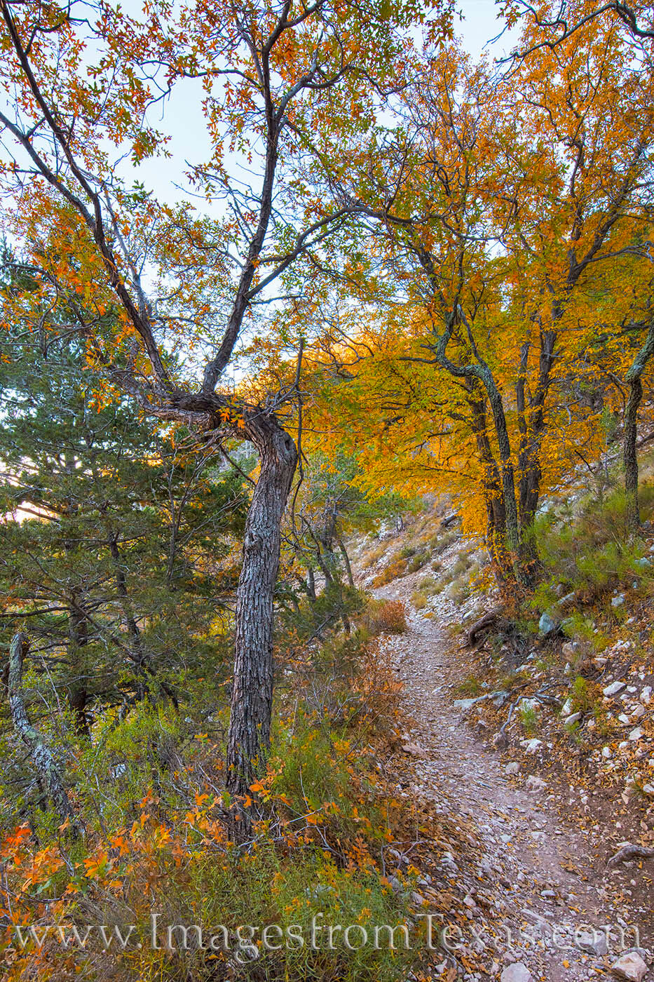 Fall colors line the trail leading to Guadalupe Peak, the highest point in Texas. While the trail is nearly 9 miles round trip...