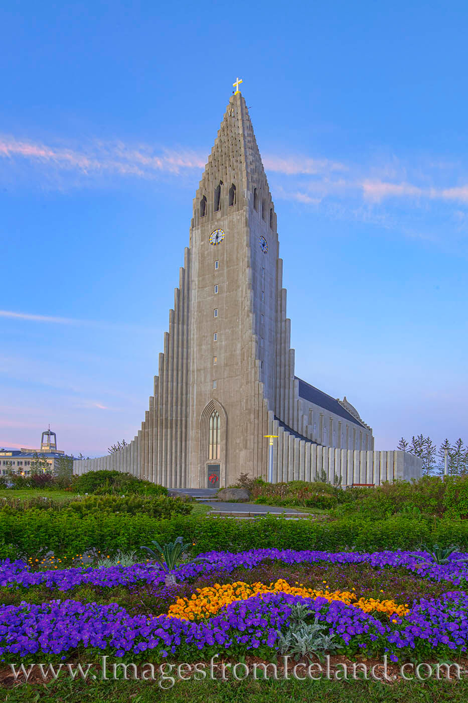 Purple and gold flowers adorn the area around Hallgrímskirkja in Iceland's capital city of Reykjavik. As the tallest church...