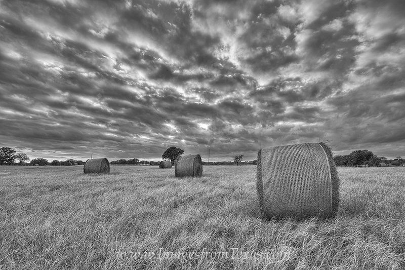 texas in black and white,black and white,texas,texas landscapes,hay,hay bales,texas ranch,texas ranch images, photo