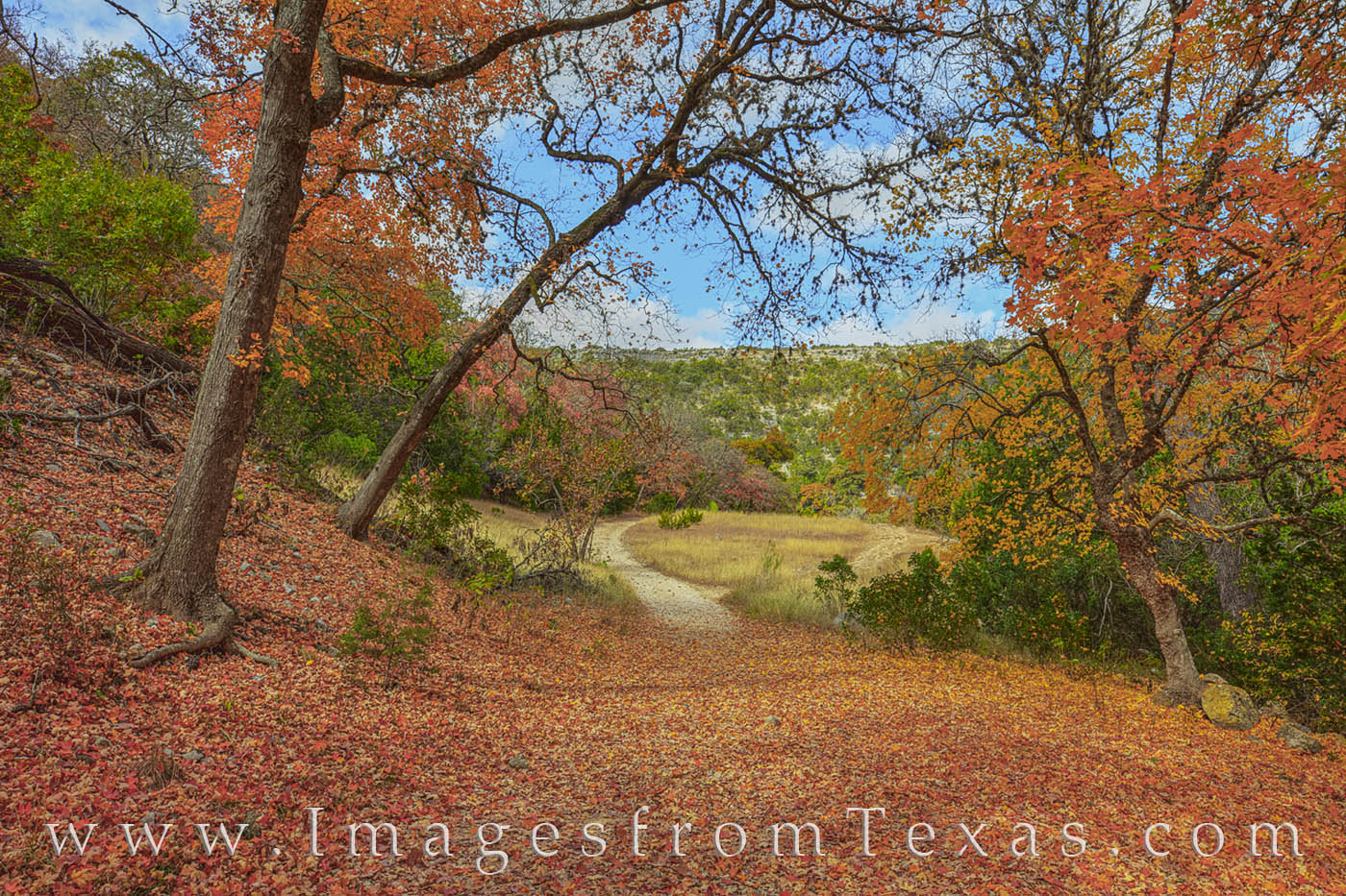 lost maples state park, red maples, texas state parks, hill country, fall, autumn, november, prints, photo
