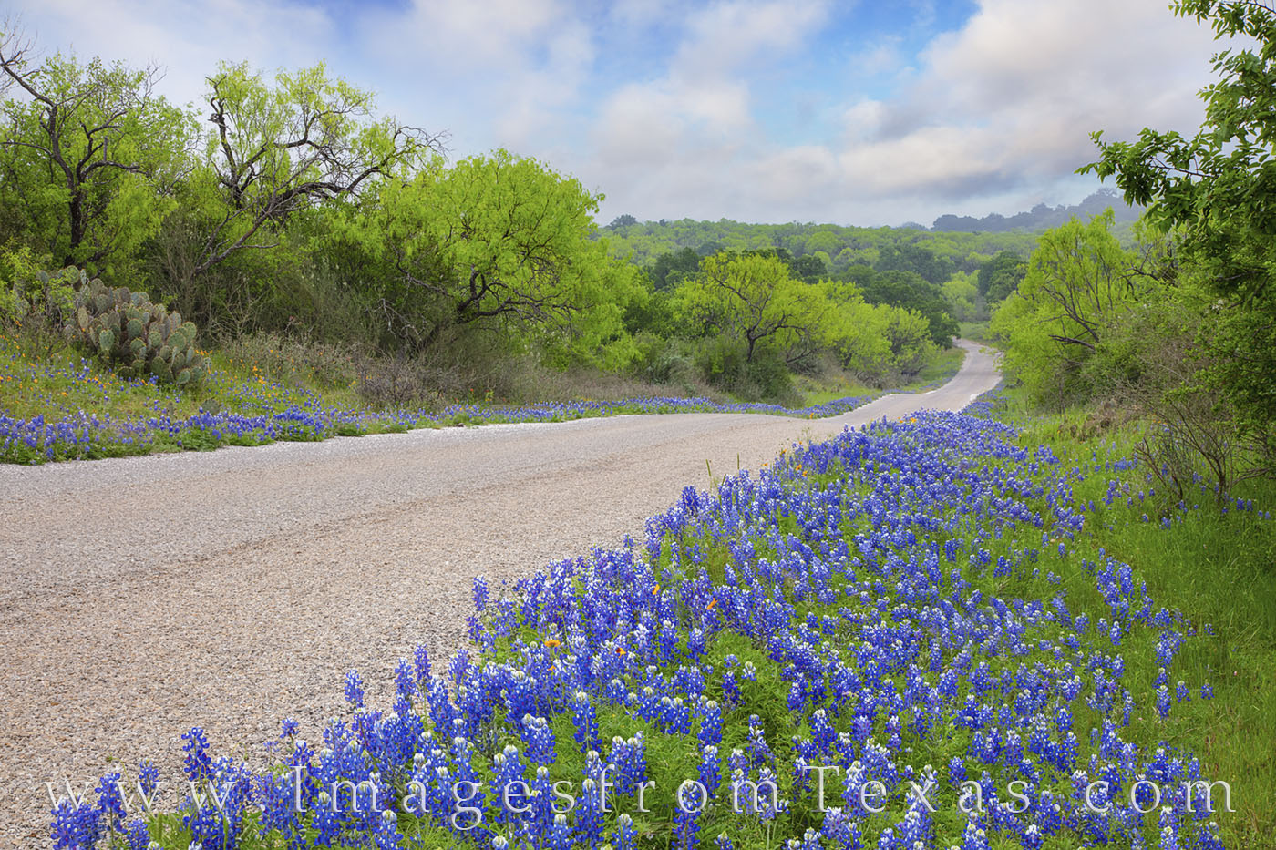bluebonnets, best bluebonnet drives, bluebonnet roads, texas hill country, bluebonnet roads, backroads, exploring, green, escape, photo