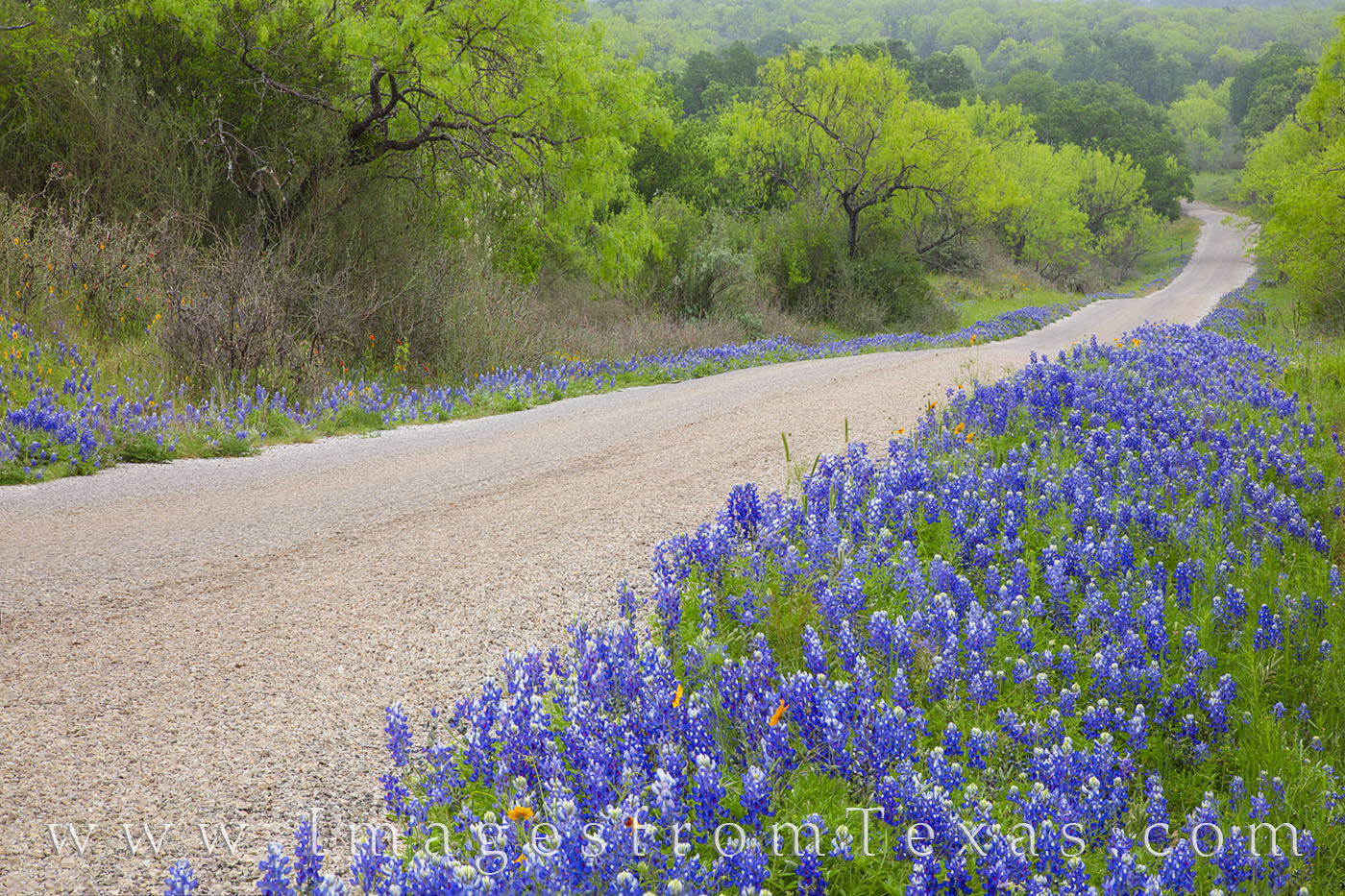 bluebonnets, best bluebonnet drives, bluebonnet roads, texas hill country, bluebonnet roads, backroads, exploring, green, escape, photo