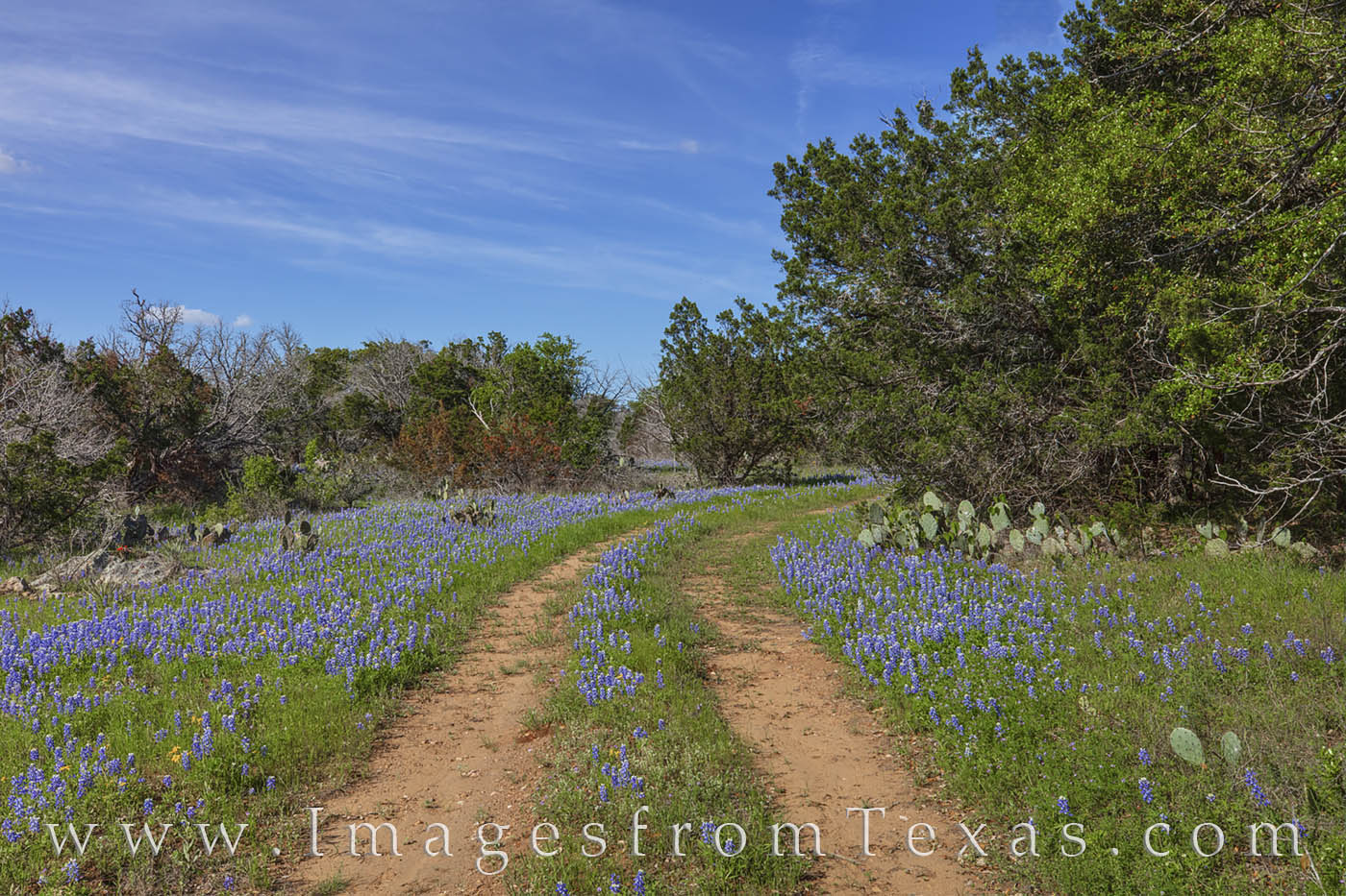 bluebonnets, trail, path, hill country, cacti, spring, afternoon, photo