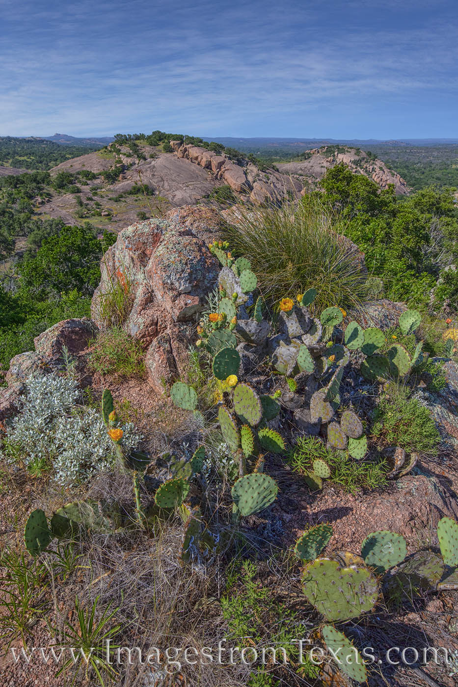 enchanted rock, turkey peak, freshman mountain, buzzard's roost, prickly pear, spring, bloom, wildfowers, photo