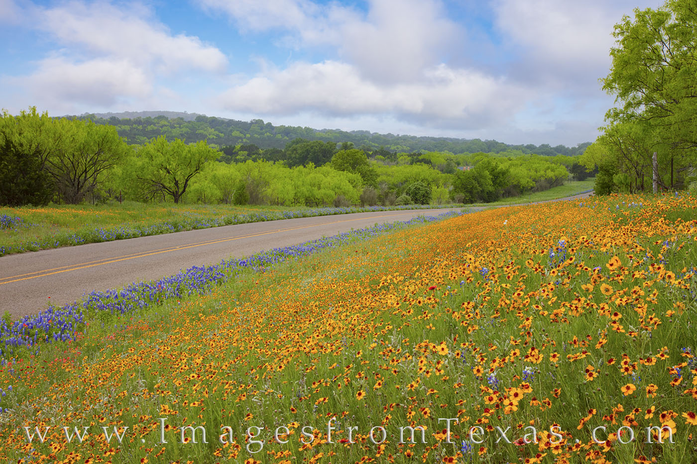 wildflowers, bluebonnets, gold, yellow, hill country, 3347, texas hill country, morning, clouds, fog, green, rural, photo