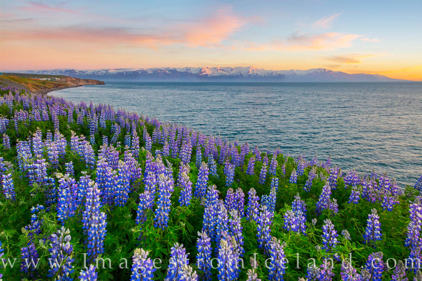Along the shores of Skjálfandi Bay, the little village of Husavik rests near the north Atlantic Ocean not far from the Arctic...