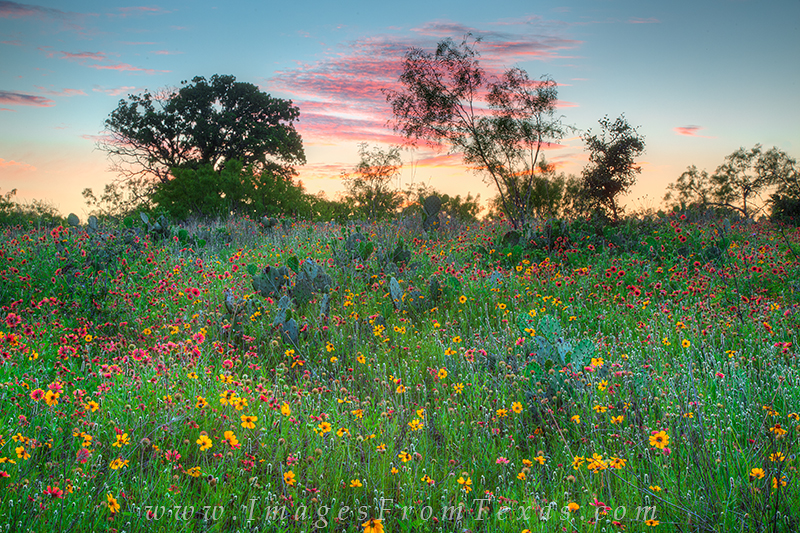 texas wildflowers,texas landscapes,texas hill country, photo