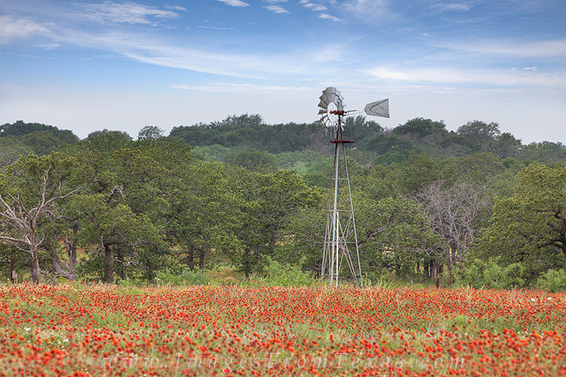 indian blankets,firewheel flowers,texas wildflowers,windmill images,wild flower images,texas hill country, photo