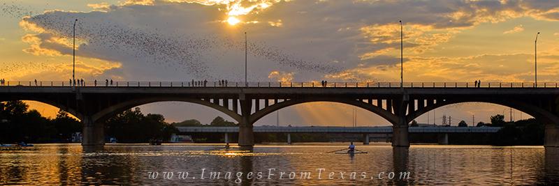austin bat images,congress avenue bats,congress bats,congress bats images,lady bird lake images,austin texas panorama, photo