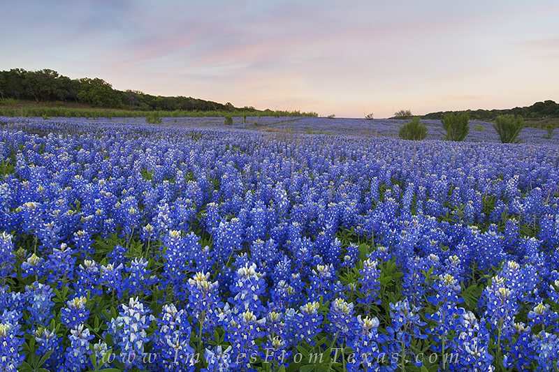 The last bluebonnet expedition of 2015 proved to be a memorable one. The clouds were faint, but still showing up, and the field...