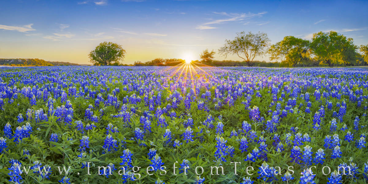 bluebonnets, bluebonnet panorama, bluebonnet photos, texas wildflower images, texas wildflower prints, texas wildflowers, turkey bend, marble falls, texas hill country, photo