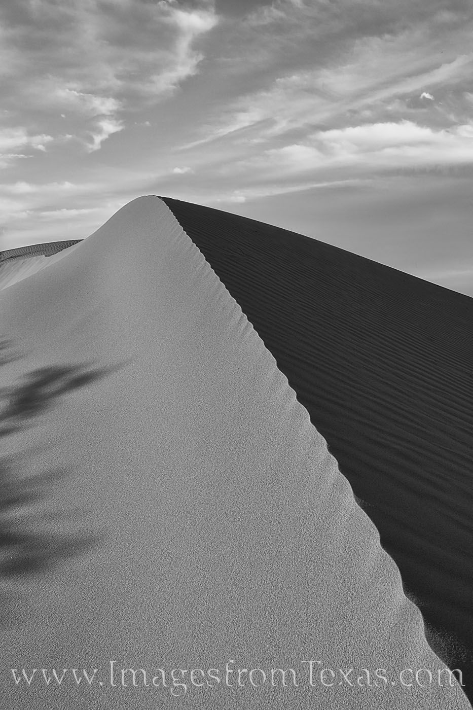 Monahans, sand dunes, sandhills, sand, west texas, sunset, evening, black and white, contrast, light, photo