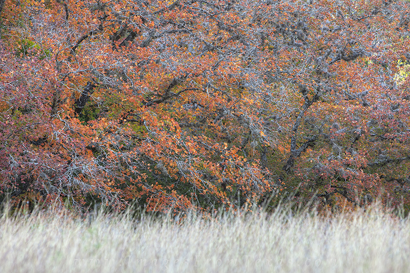 lost maples,lost maples state park,texas fall color,texas hill country, photo